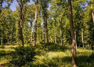 Typický lesný porast v oblasti napolovanie